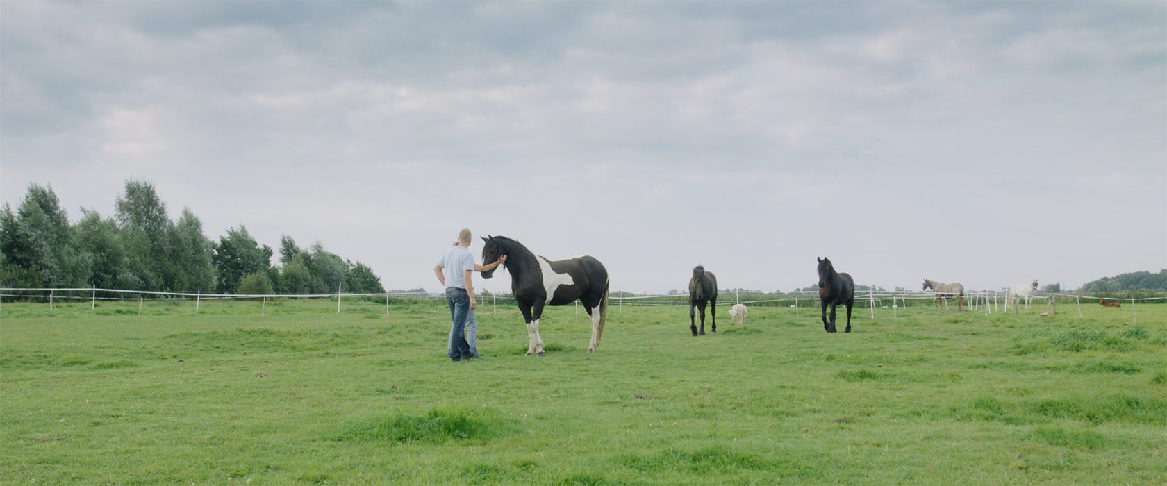 film_still_horses12_1680x700