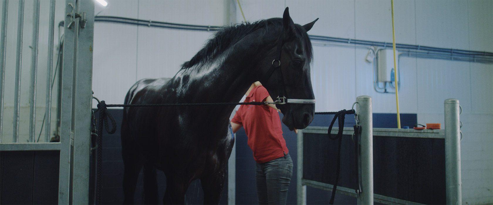 film_still_horses9_1680x700