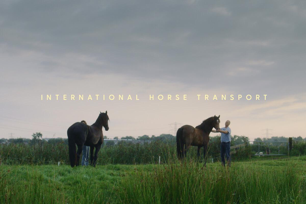 werk_horses2fly_1200x800